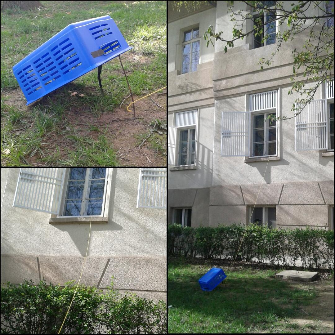 bird-trap-f